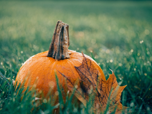 pumpkin patch in arizona